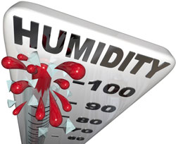 Have a Professional Perform a Humidity Test in Your Fort Wayne Home