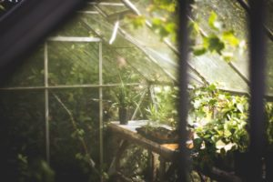 How to Have the Best Greenhouse Ventilation