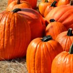 Tips for Prolonging the Life of Your Pumpkin Decorations