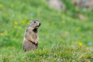 How Groundhog Day Affects Your Winter Heating