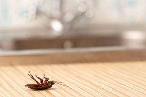 How Your HVAC Can Help with Bug Control